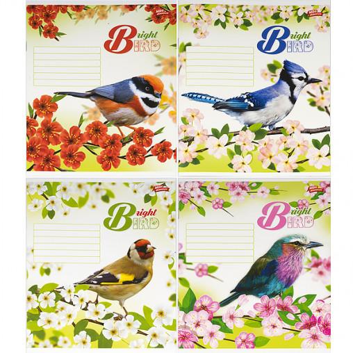 Тетрадь цветная 18 листов, линия 2740л